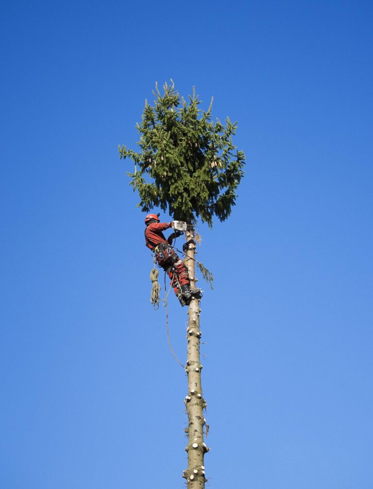 firma wycinająca drzewa, przepisy i pozwolenia