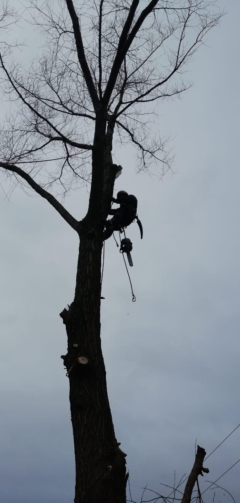 wycinka konarów i gałęzi