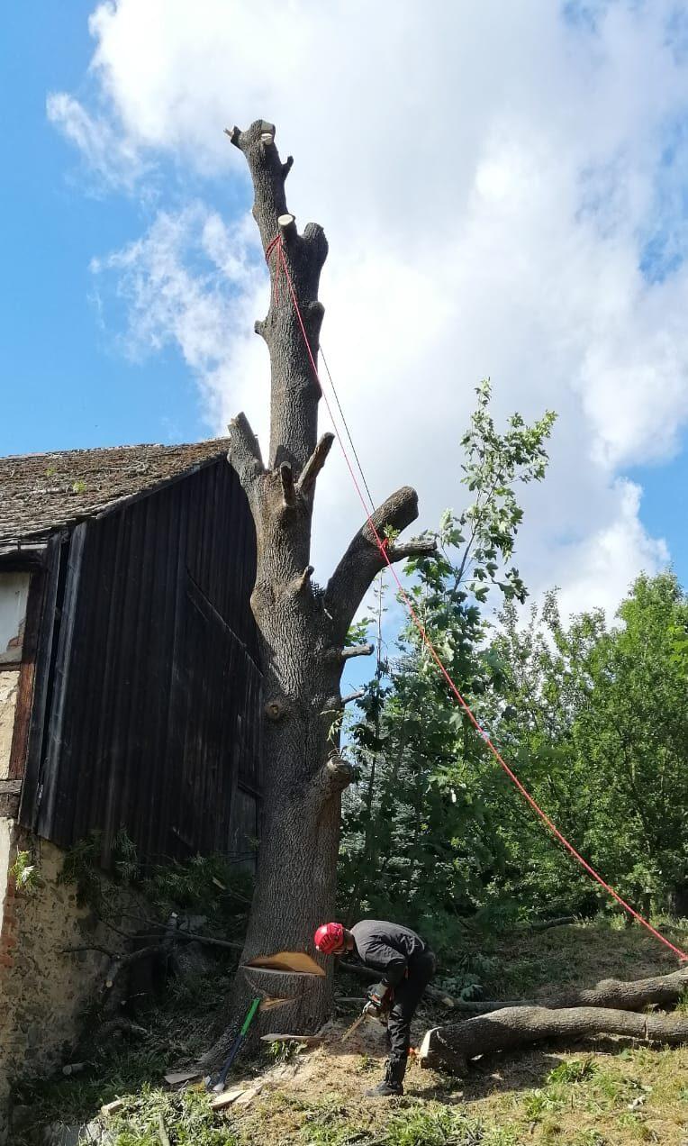 Wycinka/ścinka drzew blisko budynku