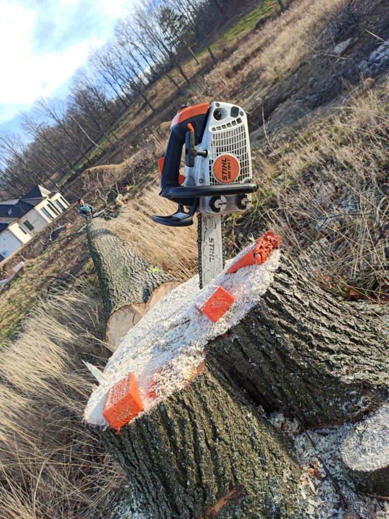 Firmy wycinające drzewa cennik