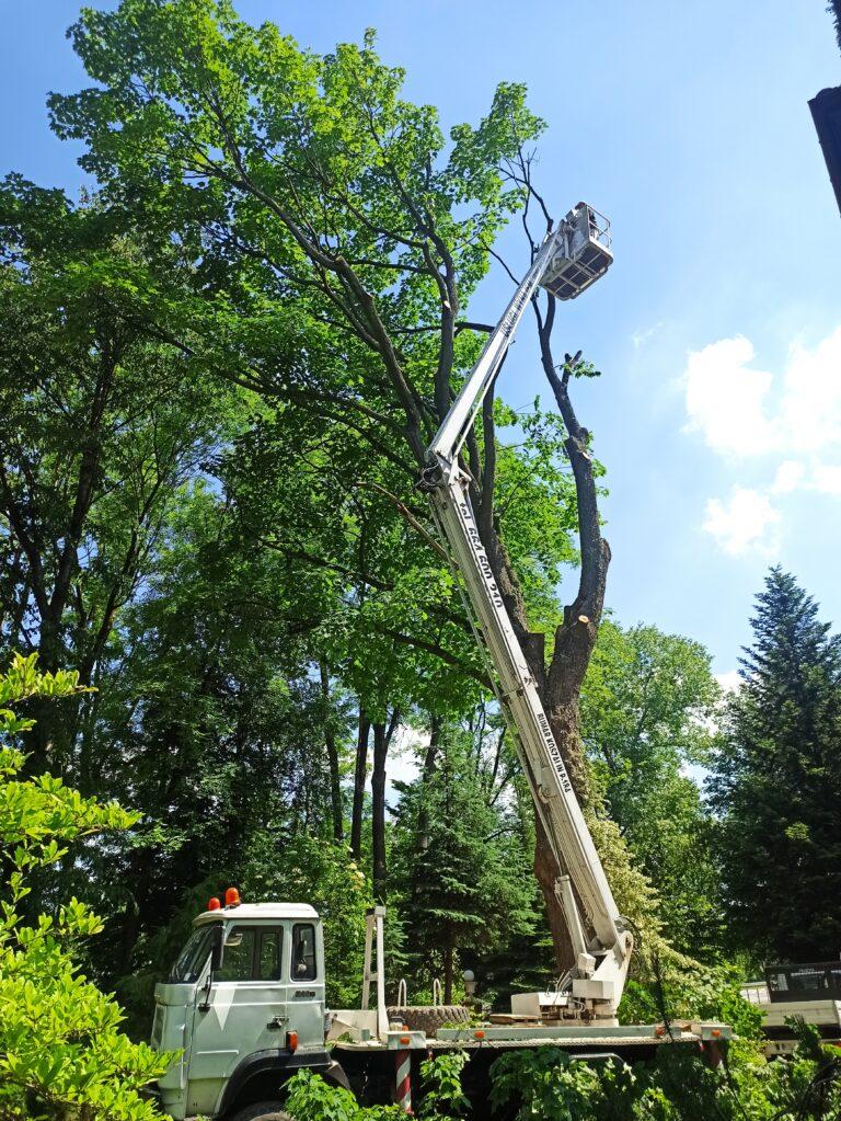 usługi wycinki i pielęgnacji drzew w Rzeszowie